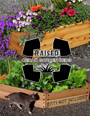 Twin Raised Cedar Garden Beds with Flowers and a Cat